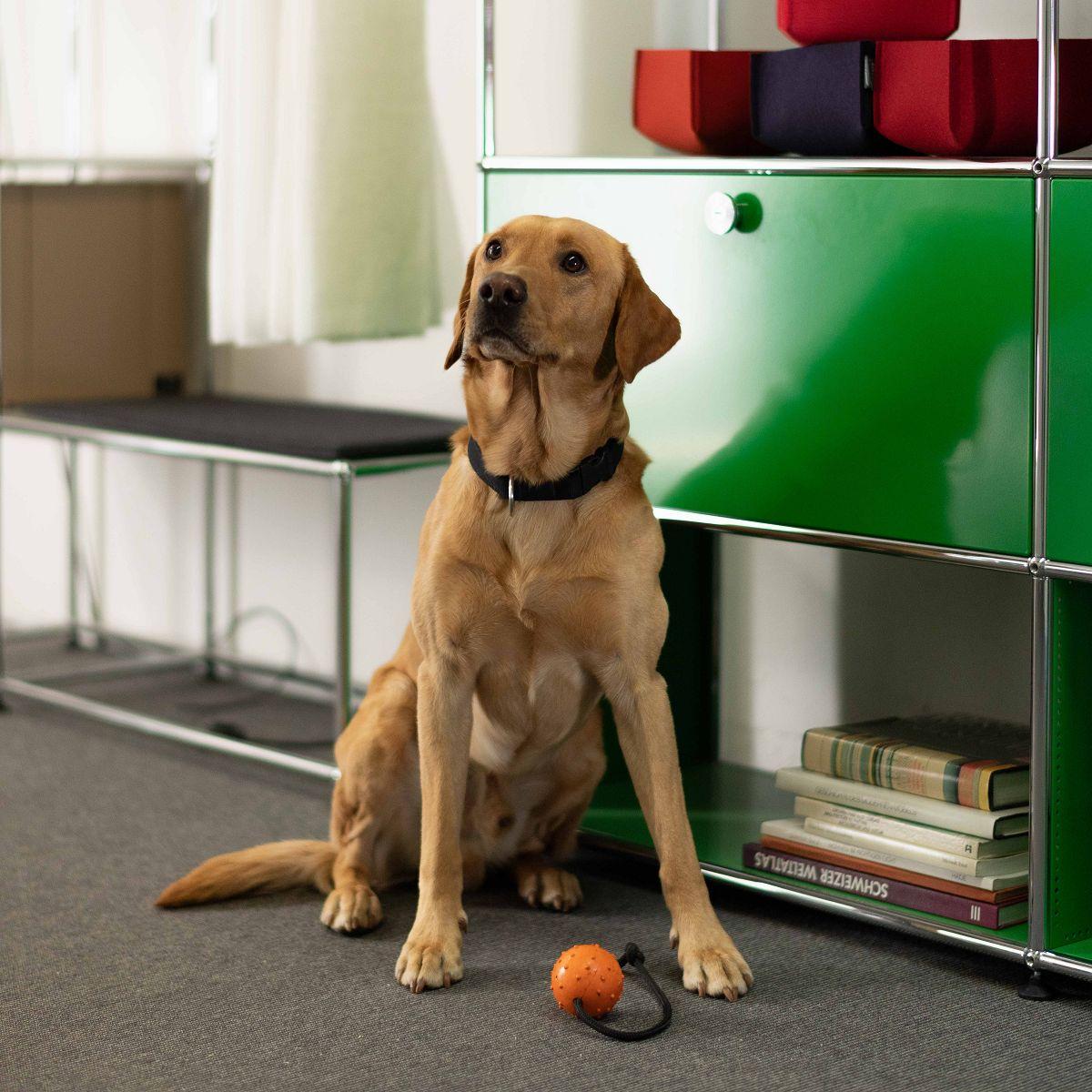 Maroon unser Bürohund | Wohntip AG